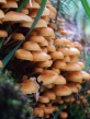 Mushrooms1