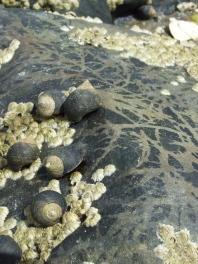 Snailscape