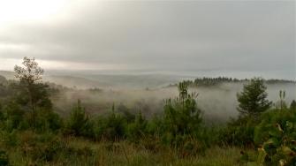 Misty So Hi Hills