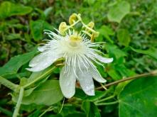 Rain Forest Flower 1