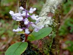 Rain Forest Flower 2