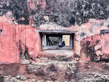 Fort Jesus Pigeon