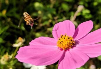 Pollen-Laden