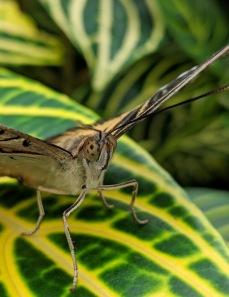 NOTL Butterfly 4